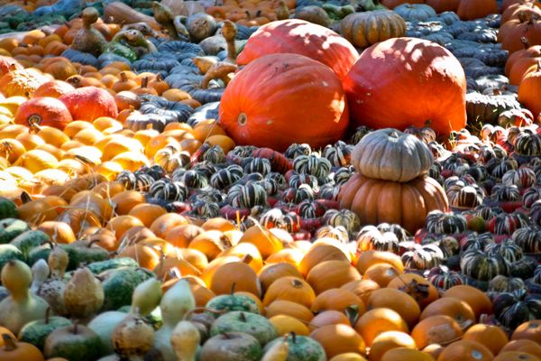 Get out there: pumpkin patches, corn mazes, and haunted houses